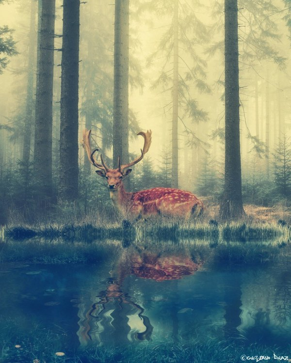 Spirit Of Forest Stock Credit & Deer