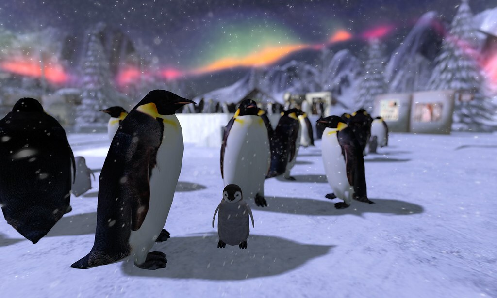 March Of The Penguins With The Northern Lights The