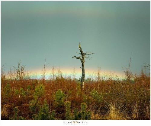 Je moet al ter plekke zijn om dit te kunnen fotograferen. Pas op pad gaan wanneer de regenboog aan de hemel staat betekent dat je te laat bent.