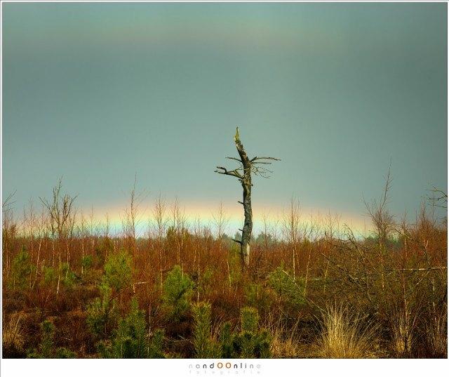 Als de zon hoog aan de hemel staat, zal de regenboog grotendeels achter de horizon verscholen gaan. Met een beetje geluk zie je het bovenste stukje nog net over de rand van de wereld kijken (Canon EOS 5D3 + 24-70L II @ 70mm | ISO200 | f/8 | 1/640)