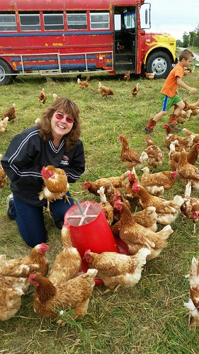 The chicken ranching hens rotate 72 hours behind the cattle herd to provide insect control, and the bus provides easy mobility from paddock to paddock.