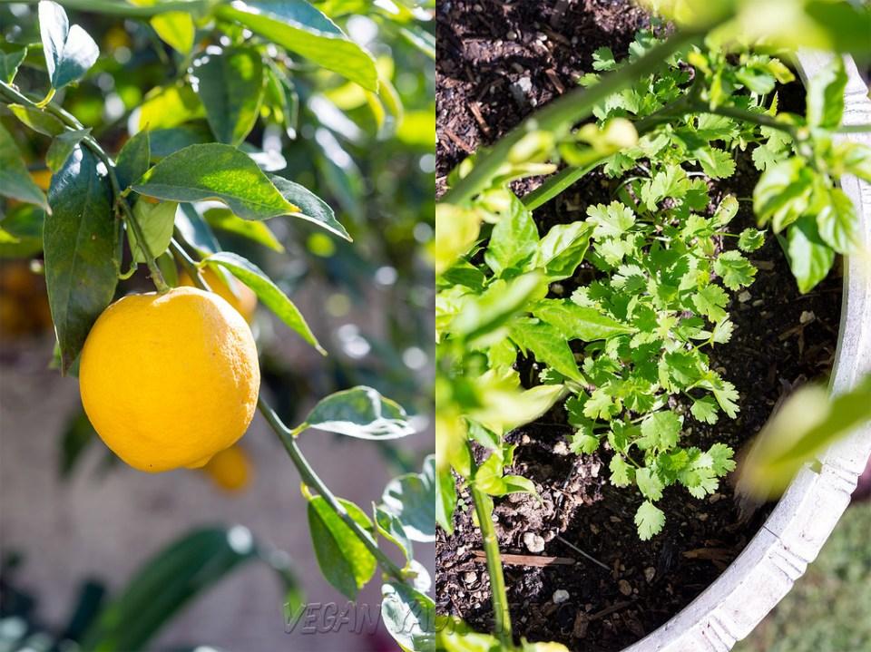 Organic Fruit & Herb Gardening