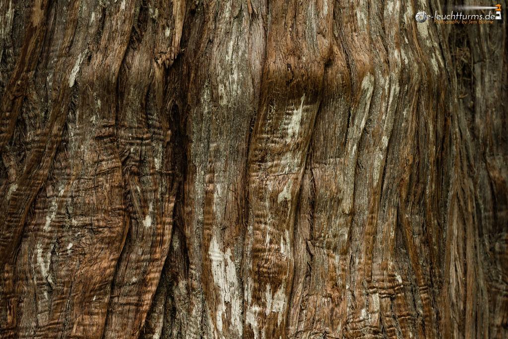 Douglas fir bark structure