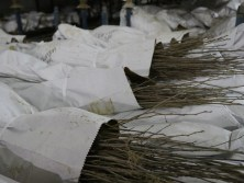 Photo of tree and shrub seedlings packaged for delivery from the John S. Ayton State Tree Nursery