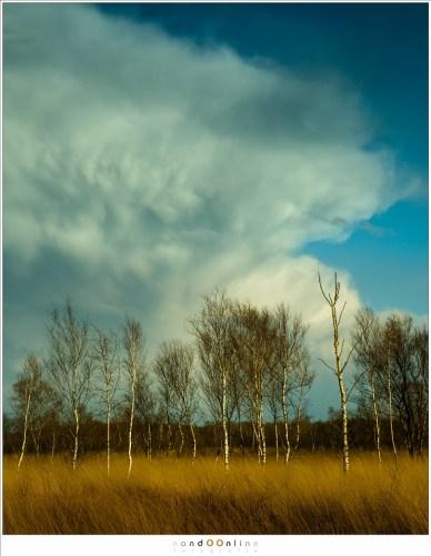 Immense wolken, kilometers groot en hoog, torenen boven het landschap uit. Ze hebben vormen, namen, dit soort wolken, en huizen verrassingen in zich die de argeloze wandelaar een nat pak kunnen geven.