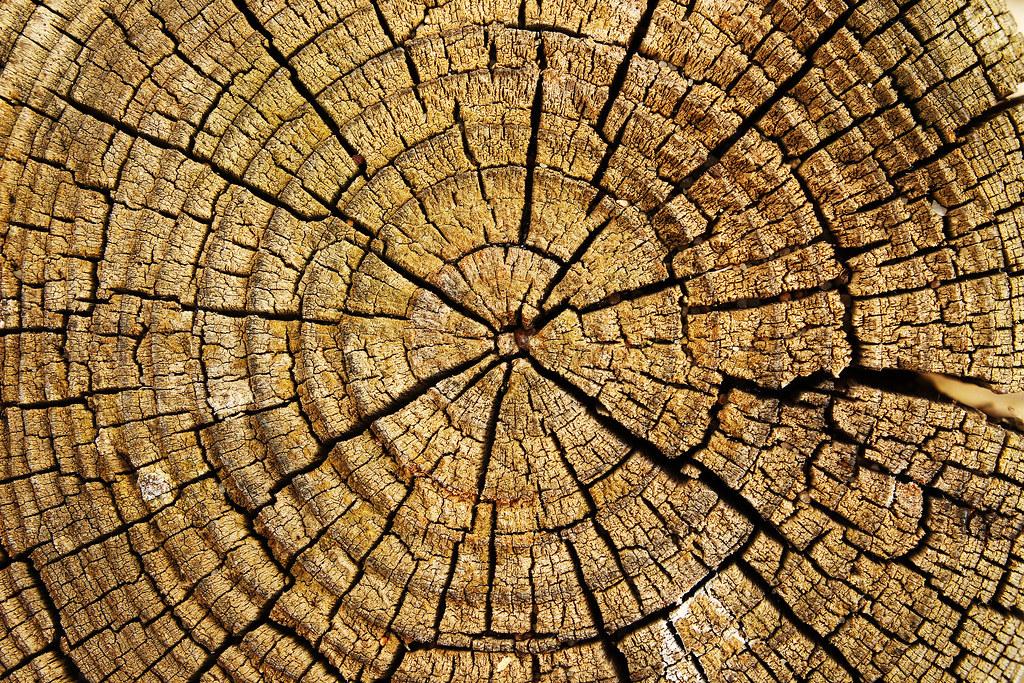 Imagen gratis de los anillos de un tronco de árbol cortado