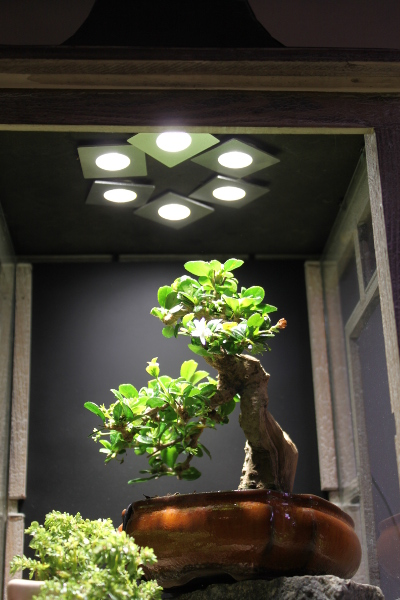 indoor bonsai under led lights page 15