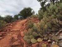 Impromptu cactus garden