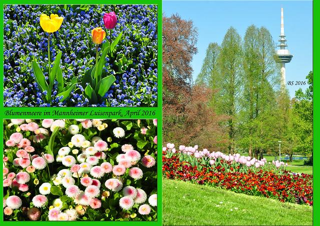 Tulpen aus Amsterdam   Brigitte Stolle