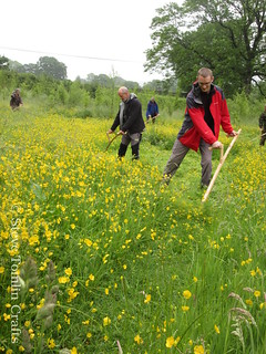 learn to scythe a meadow in Cumbria