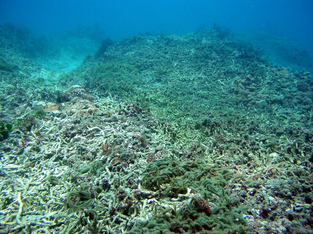珊瑚礁   臺灣環境資訊協會-環境資訊中心