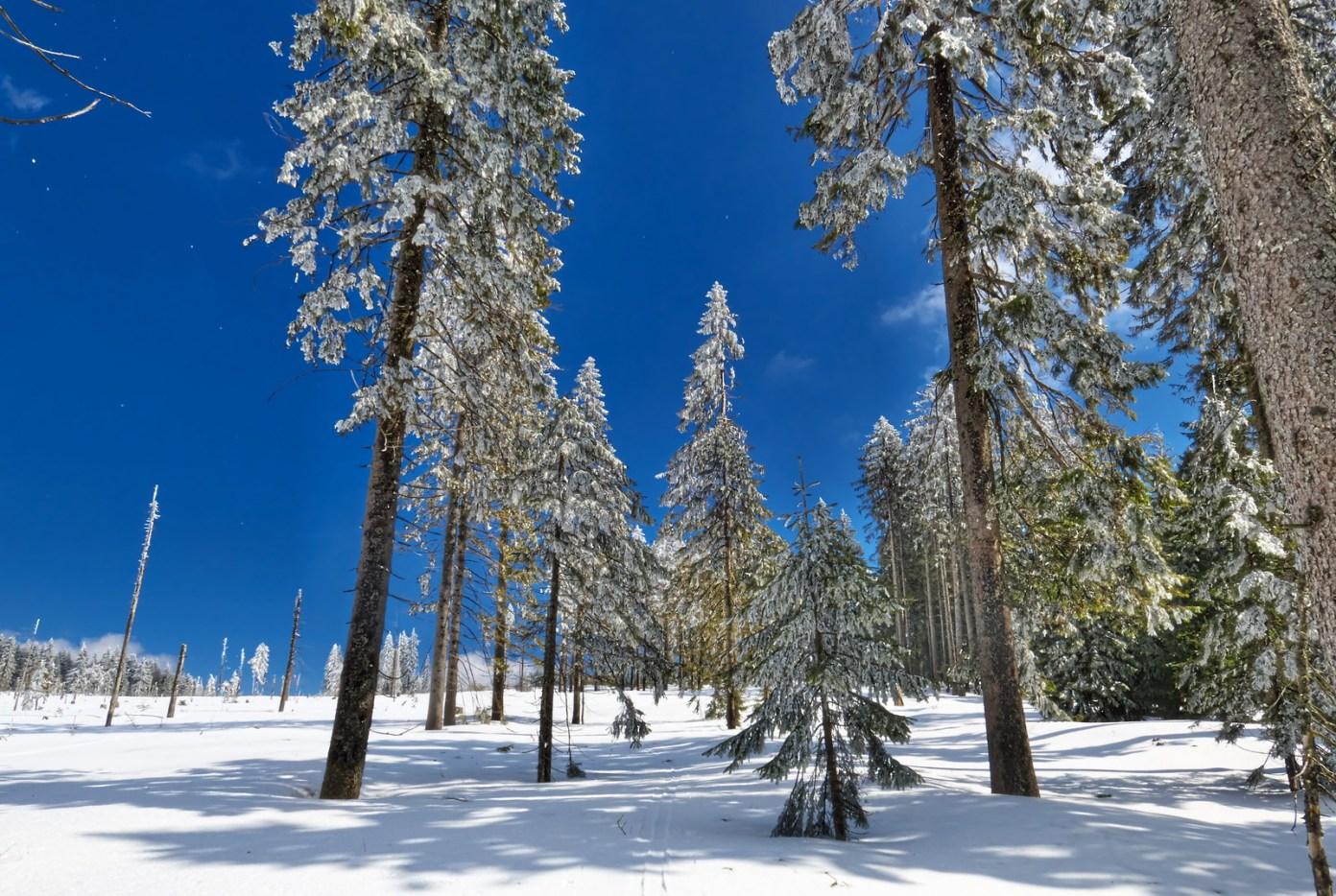 Nádherný konec zimy na Šumavě