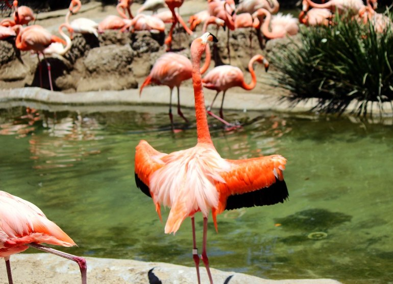Flamingos - Everyone, out of the pool!