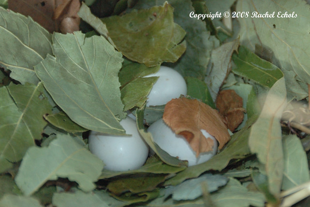 Purple Martin Eggs A friend of mine let me go to her