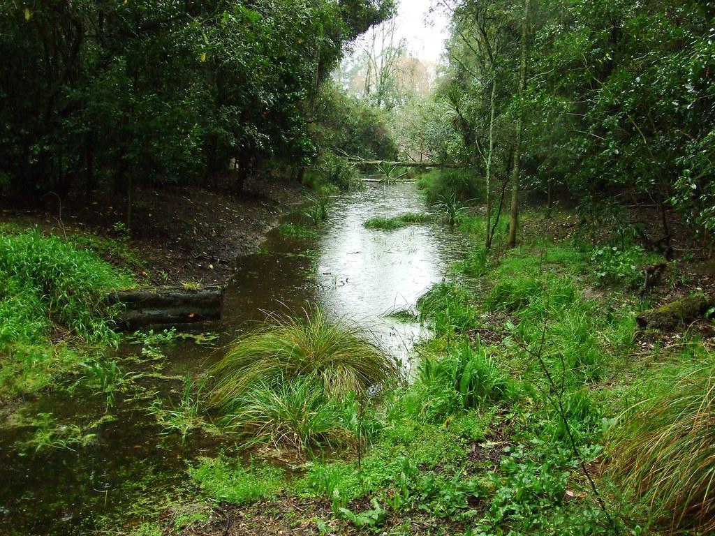 Beautiful Manawatu Wetlands It Was Raining Quite Heavy