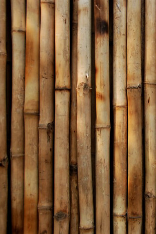 iPhone Bamboo  A bamboo wallpaper for the iPhone The