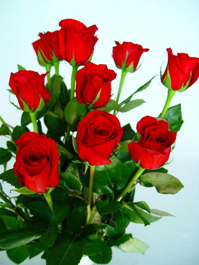 Flores de rosas rojas  El consumo de flores naturales en