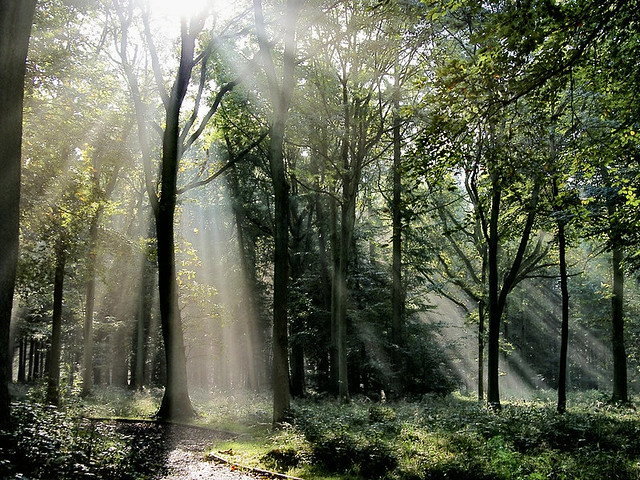Www 3d God Wallpaper Com Light In The Forest Large And F11 Autumn Mists Alex