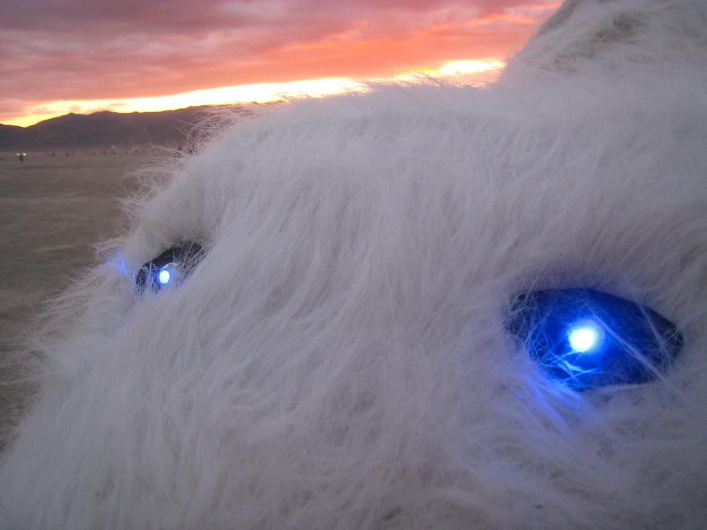 Blue Eyed Polar Bear  I loved the eyes on this Polar Bear
