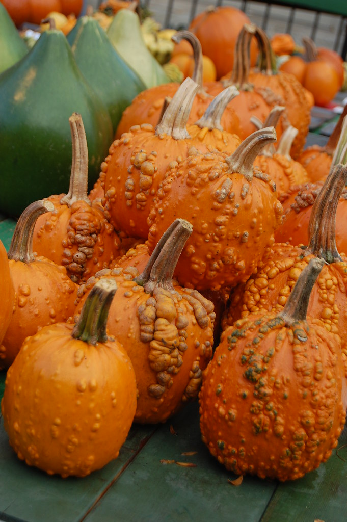 Free Fall Desktop Wallpaper Backgrounds Bumpy Pumpkins Saw These Gorgeous Bumpy Pumpkins At The
