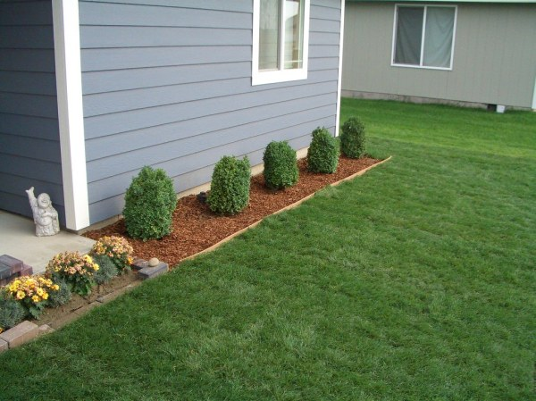 boxwood shrubs in front of house