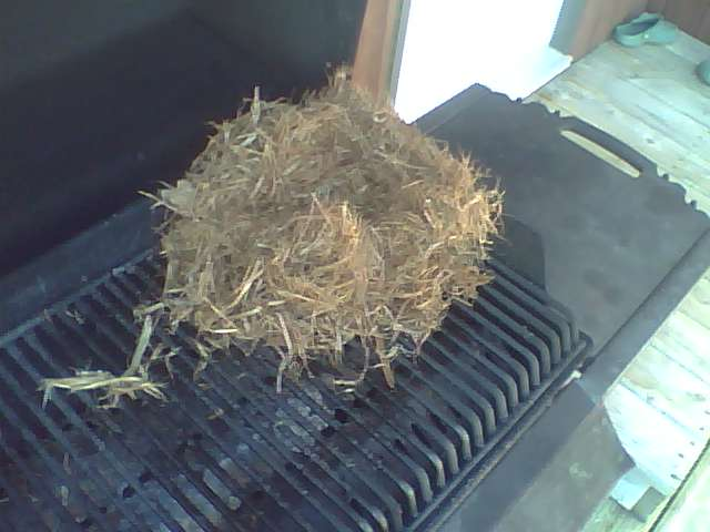 Barbecue chipmunk nest  so Im at my parents we open up
