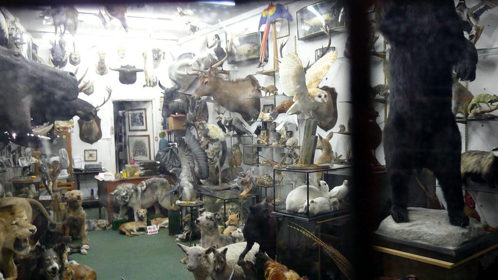 Taxidermists window at night Get Stuffed Essex Road Is