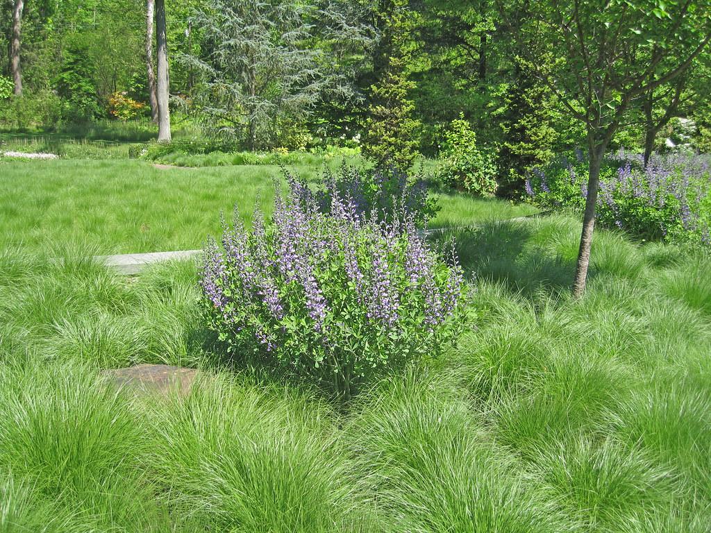 Prairie dropseed at Chanticleer  Susan Harris  Flickr