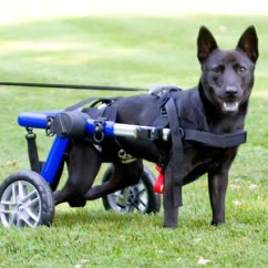 Wheelchair Jobs Desk Chair Big And Tall Adopted Chow In A Dog | This Dog, Lucy, Was Rescu… Flickr