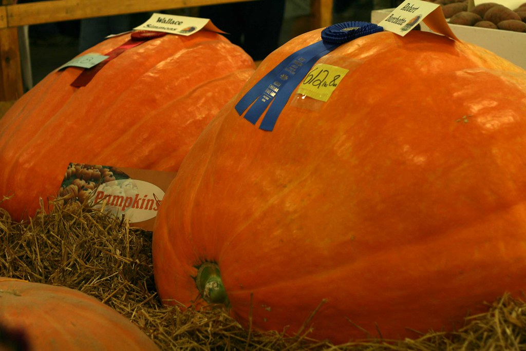 Blue Ribbon Pumpkin at the State Fair  This six hundred
