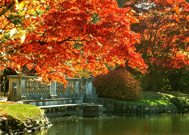Fall Autumn Wallpaper Free Autumn At Sheffield Park Gardens East Sussex Sheffield