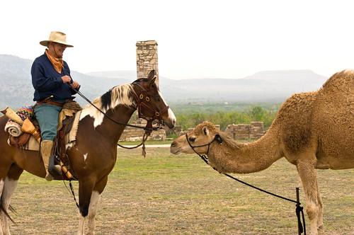 Horse Meets Camel Flickr Photo Sharing