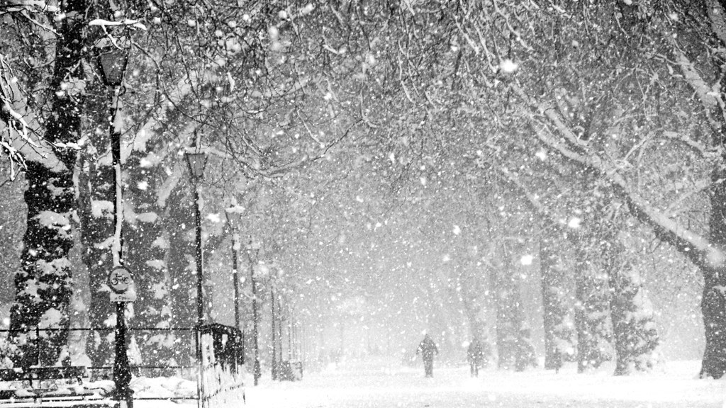 Live Winter Snow Fall Background Wallpaper Heavy Snow Blizzard Like Even I Think This Is Going To