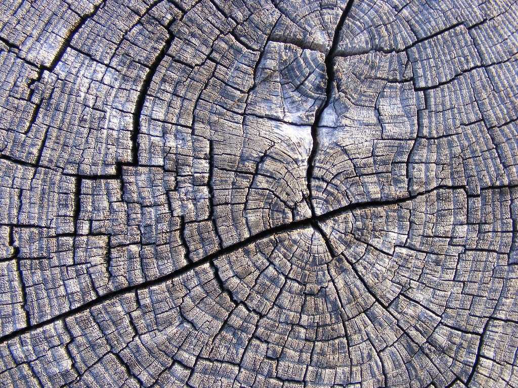 Old Wood Wallpaper Hd Tree Wood Texture 14 This Work Has Been Released By
