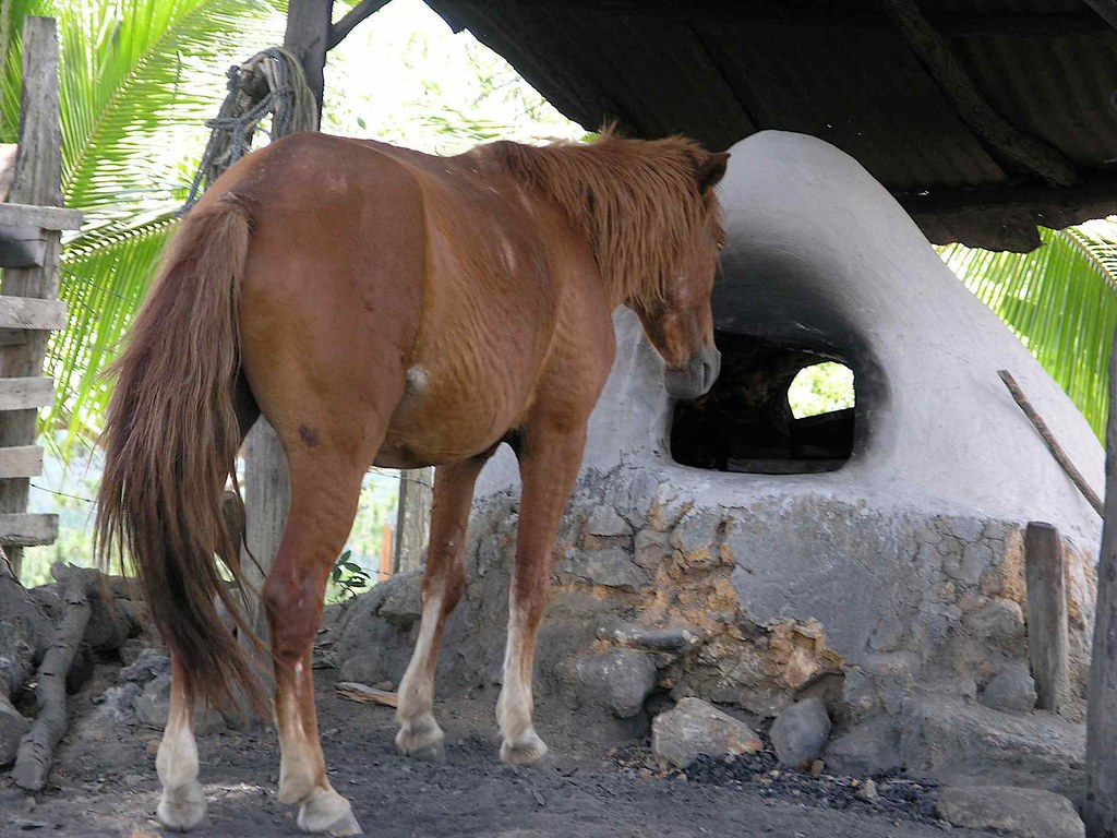 Horse looking for something to eat in an oven  Caballo bu