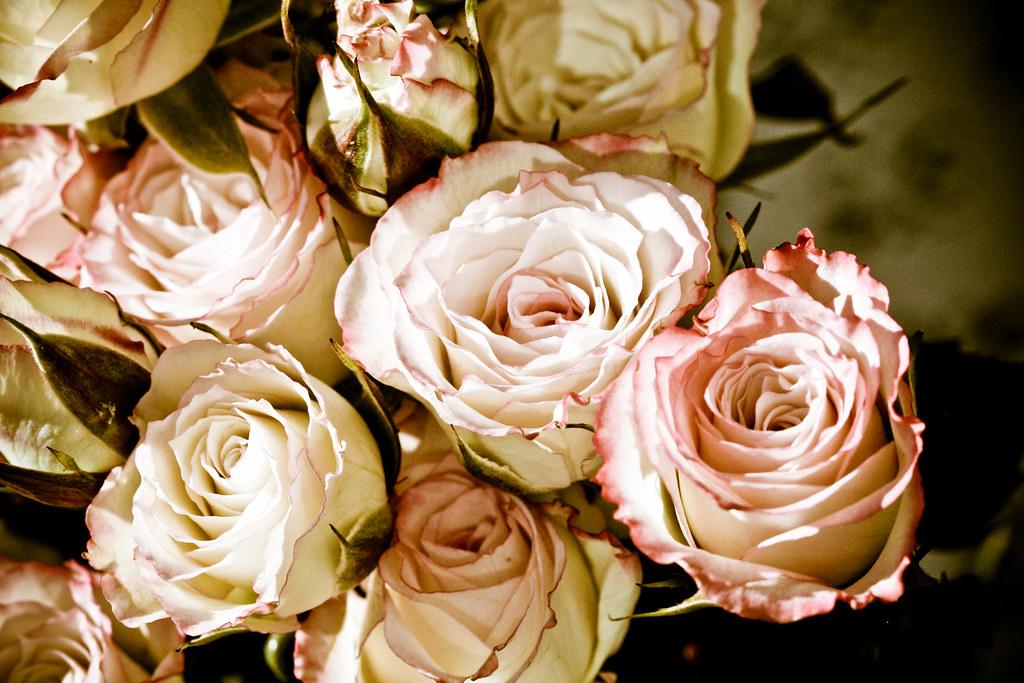 Antique Roses  Sharon Mollerus  Flickr