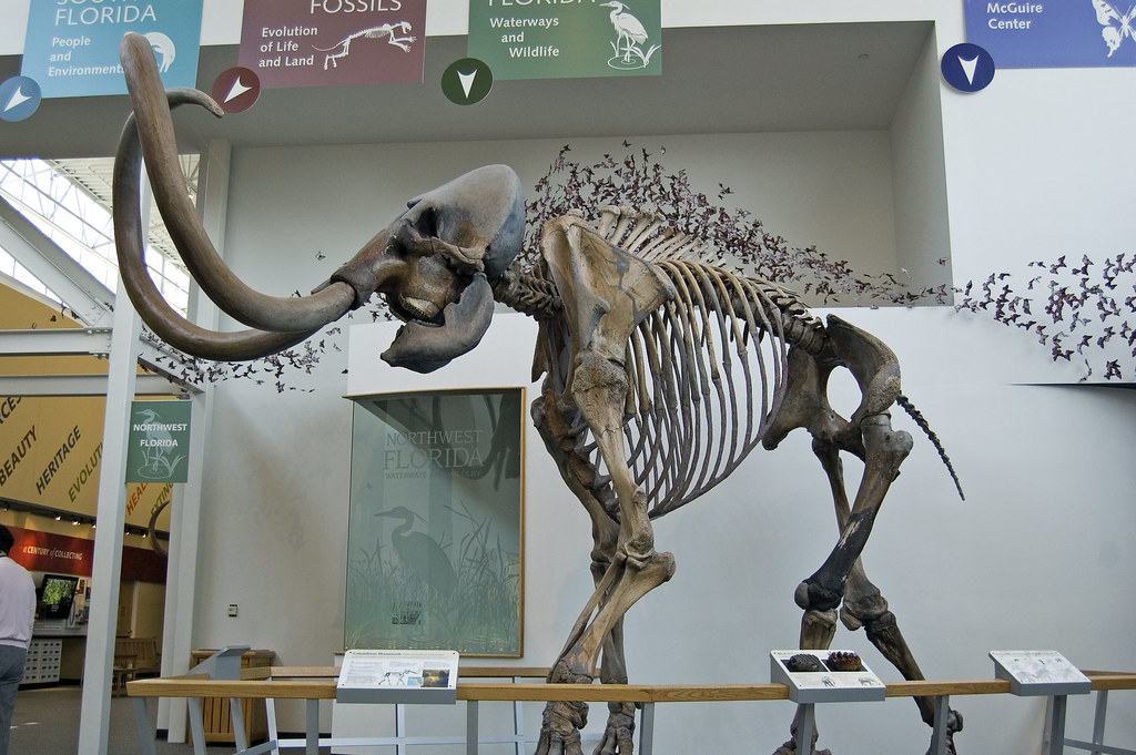 Columbian Mammoth Side View A Columbian Mammoth