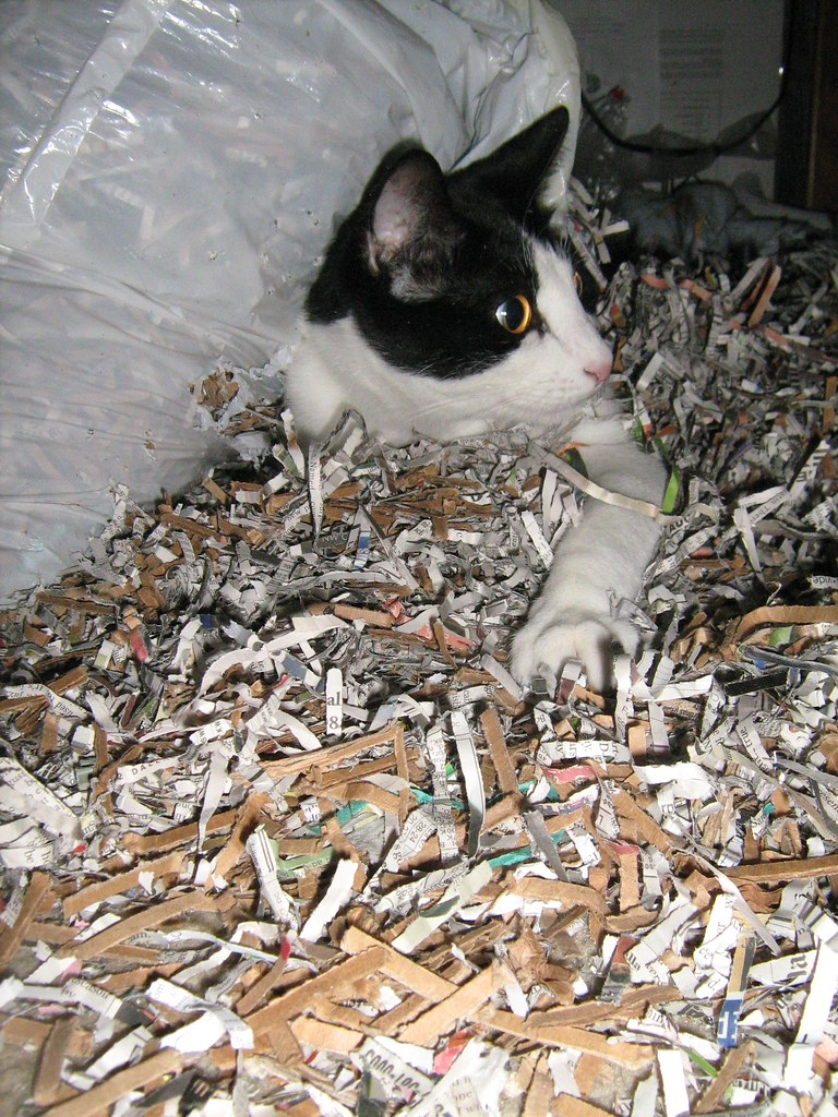 Squeaky vs the bag of shredded paper  Kevin was storing pa  Flickr