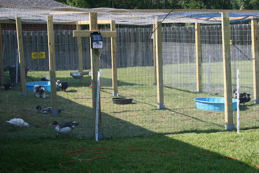 Duck Enclosure Complete  Now the play area is complete