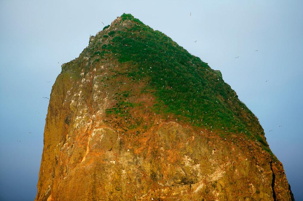Haystack Rock closeup Bird and Marine Sanctuary 1 of