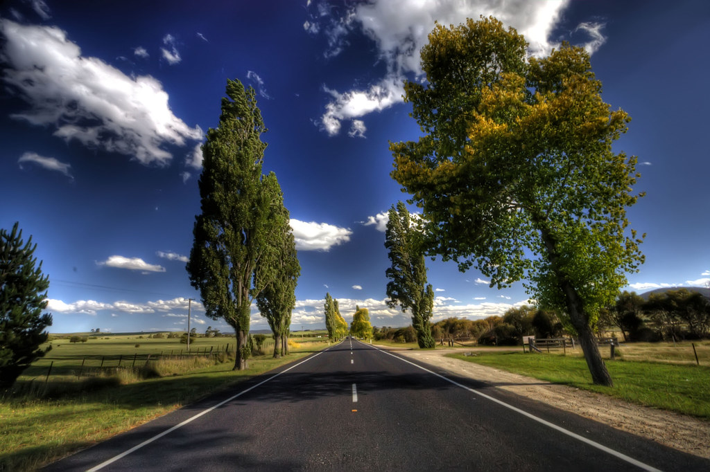 Fall Road Wallpaper The Leaning Tree That Tree On The Right Is Leaning And