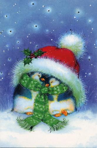 Cute Christmas Penguin Wallpaper Lituania 2009 Year Yanina Buraya Flickr