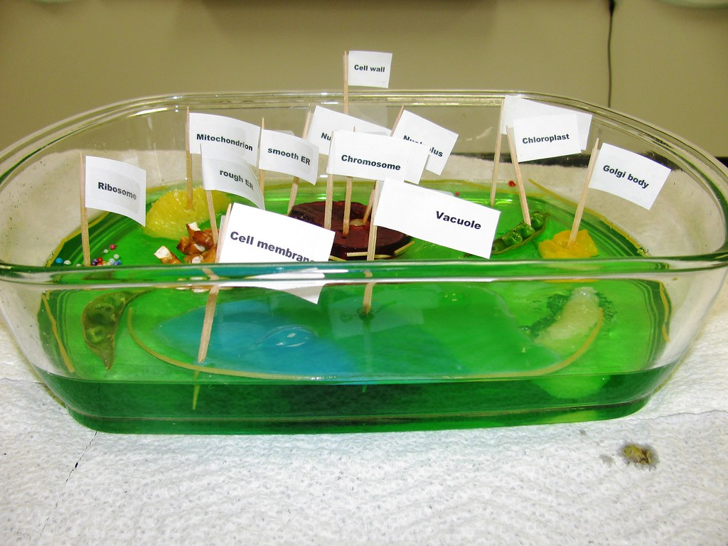 plant cell diagram project emg guitar wiring edible florida science flickr