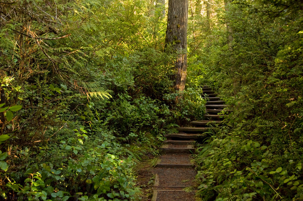 Cape Alava Trail Ozette Triangle  This weekend on my