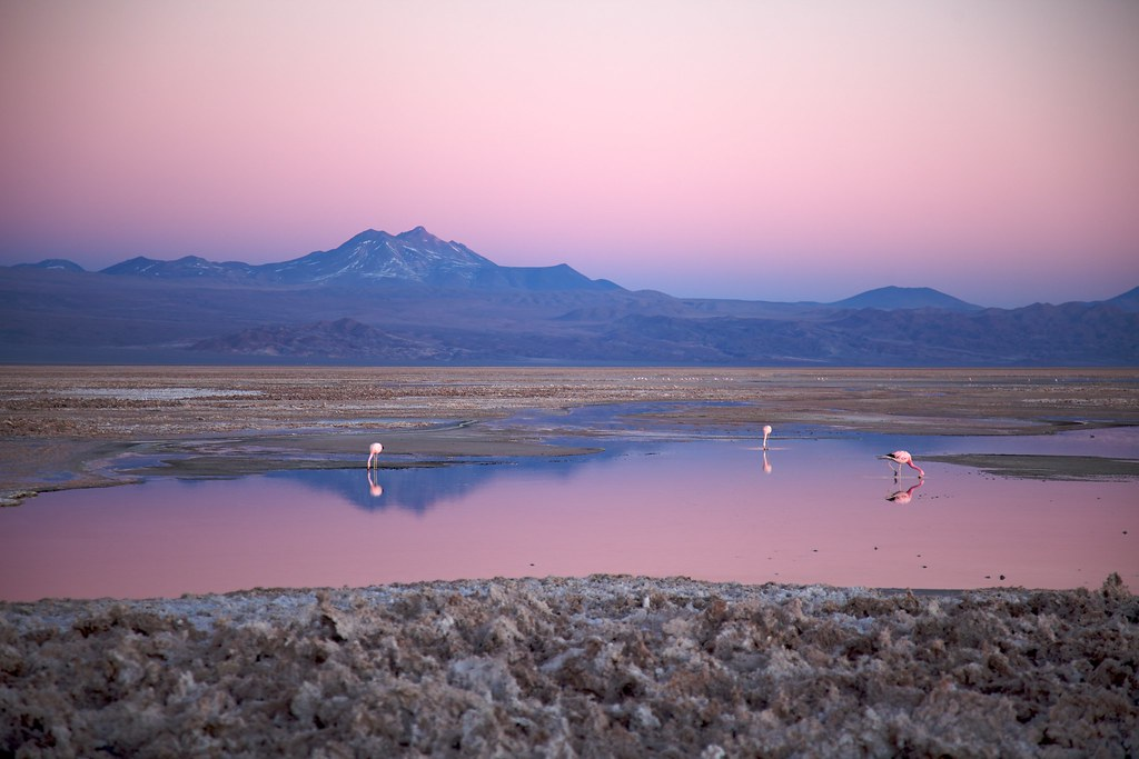 Salar de Atacama  Salar de Atacama wwwdecam  500px