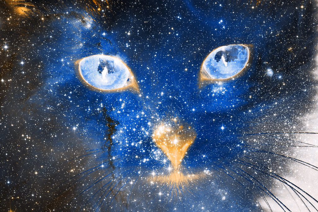 Cute Blue Wallpaper Backgrounds Cosmic Kitten Photomanipulation Combining A Gaseous