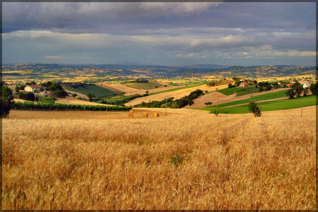 Che ne sai tu di un campo di grano  poesia di un amore pr  Flickr
