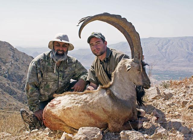 Animal Wallpaper Sindh Ibex Hunt In Durreji Pakistan Kaiser Khan Flickr