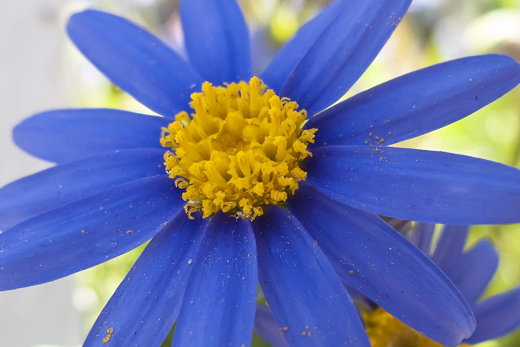 Full 3d Wallpaper Wallpaper 1920x1280 Blue Aster This Is My Current
