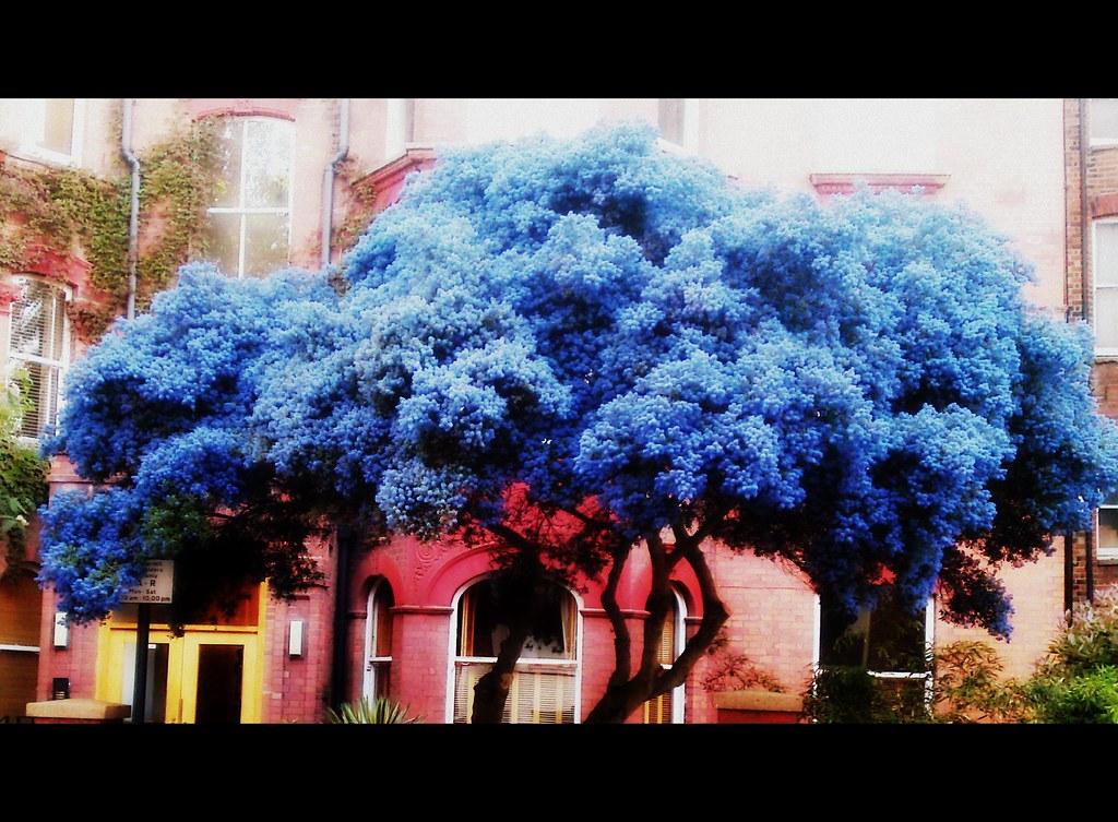 Peaceful Blue tree  cinematic edit  Dawn Newton  Flickr
